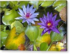 Lilies No. 2 Acrylic Print