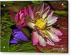 Lilies No. 20 Acrylic Print by Anne Klar