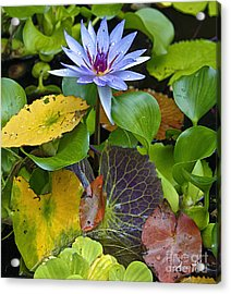 Acrylic Print featuring the photograph Lilies No. 24 by Anne Klar