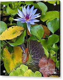 Lilies No. 24 Acrylic Print