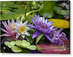 Acrylic Print featuring the photograph Lilies No. 26 by Anne Klar