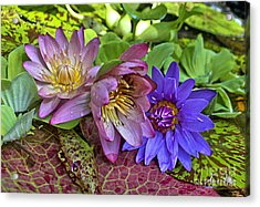 Acrylic Print featuring the photograph Lilies No. 29 by Anne Klar