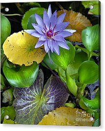 Lilies No. 3 Acrylic Print by Anne Klar