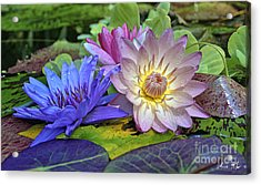 Acrylic Print featuring the photograph Lilies No. 30 by Anne Klar