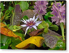 Acrylic Print featuring the photograph Lilies No. 35 by Anne Klar