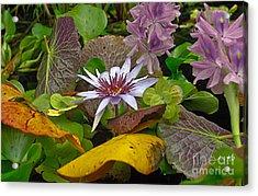 Lilies No. 35 Acrylic Print