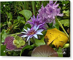 Acrylic Print featuring the photograph Lilies No. 39 by Anne Klar