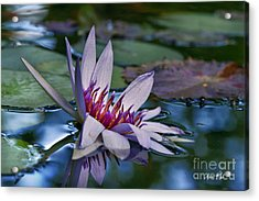 Acrylic Print featuring the photograph Lilies No. 40 by Anne Klar