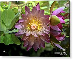 Acrylic Print featuring the photograph Lilies No. 43 by Anne Klar