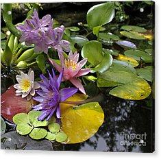 Lilies No. 7 Acrylic Print