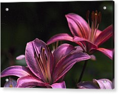 Acrylic Print featuring the photograph Lilies Of The Field by Wanda Brandon