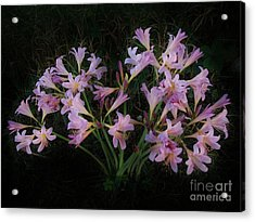 Liliies In The Valley Acrylic Print by Marsha Heiken