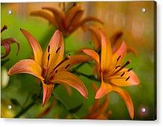 Lillies Acrylic Print by Benjamin Clark