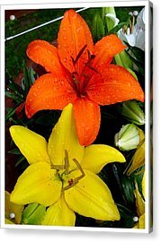 Lillies In Vermont Acrylic Print by Frank Wickham