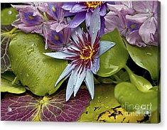 Lillies No. 9 Acrylic Print