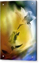Lilly Acrylic Print by Mauro Celotti