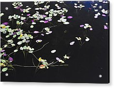 Lilly Pads Acrylic Print by Andres LaBrada