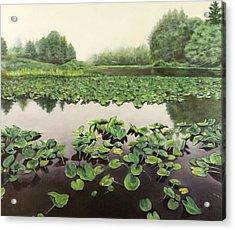 Lilly Pond Dreams Acrylic Print by Lorna Saiki