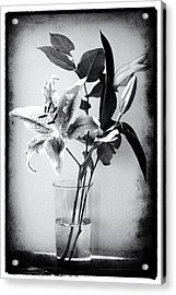 Lily 320bw Acrylic Print by James Bethanis
