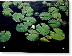 Lily Alone Acrylic Print by May Photography