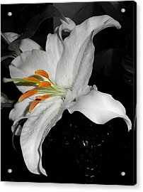 Lily Bell Acrylic Print by Sian Lindemann
