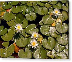 Acrylic Print featuring the painting Lily Blooms by Gretchen Allen