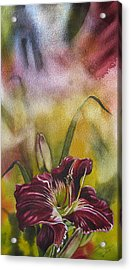 Lily In Red Acrylic Print