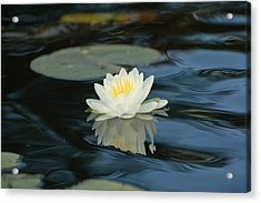 Lily In The Current Acrylic Print
