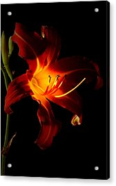 Lily In The Light Acrylic Print