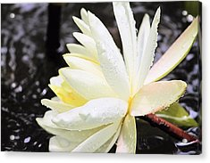 Lily In White Acrylic Print