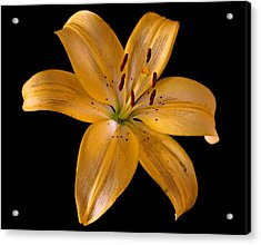 Acrylic Print featuring the photograph Lily by Karen Harrison