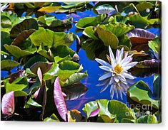 Acrylic Print featuring the photograph Lily by Lawrence Burry