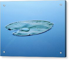 Lily Pad In The Sky Acrylic Print