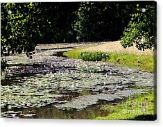Lily Pad Lake 2 Acrylic Print by Pauline Ross