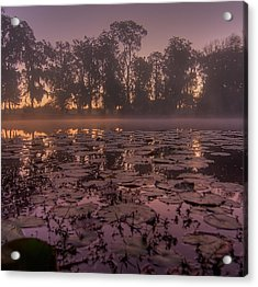 Acrylic Print featuring the photograph Lily Pads In The Fog by Dan Wells
