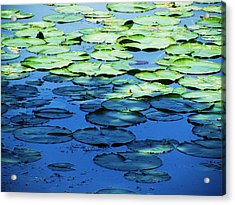 Lily Pads -one Acrylic Print by Todd Sherlock