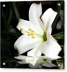 Lily Reflection Acrylic Print by Pamela Hyde Wilson