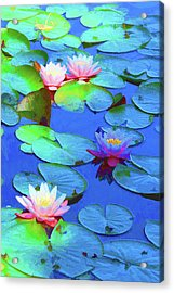Lily Splendor Acrylic Print by Brian Davis