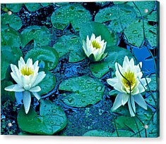 Lily Three Acrylic Print by Debra     Vatalaro
