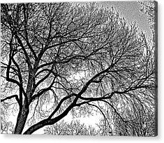 Limbeaux Acrylic Print by Dan Stone