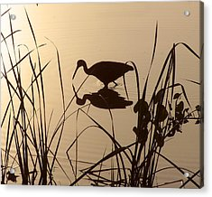 Limpkin At Dawn Acrylic Print