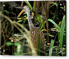 Limpkin Acrylic Print by Theresa Willingham
