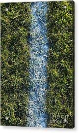 Line On Artificial Turf Acrylic Print by Paul Edmondson