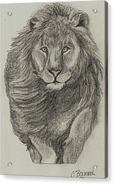 Acrylic Print featuring the drawing Lion by Christy Saunders Church