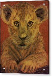 Acrylic Print featuring the pastel Lion Cub by Christy Saunders Church