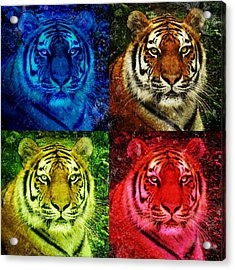 Lion Face Colored Squares Acrylic Print by Angela Waye