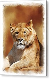 Lioness Portrait Acrylic Print by Michael Greenaway