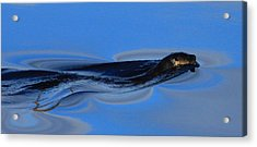 Liquid Silk Acrylic Print by Wild Expressions Photography