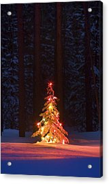 Lit Christmas Tree In A Forest Acrylic Print by Carson Ganci