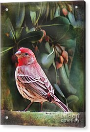 Little Bird Iv Acrylic Print by Rhonda Strickland
